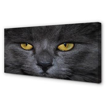 Obrazy na płótnie Czarny kot