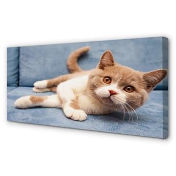 Obraz na płótnie Leżący kot