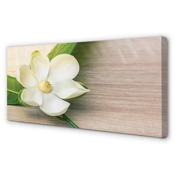 Obraz na płótnie Biała magnolia
