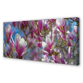 Obrazy na płótnie Magnolia drzewa