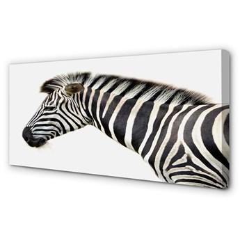 Obrazy na płótnie Zebra