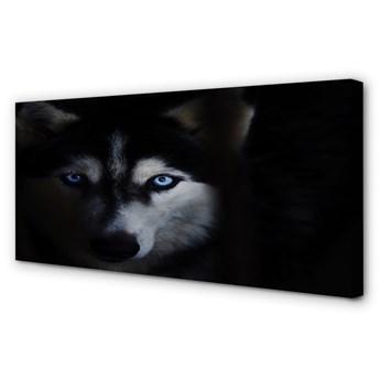 Obrazy na płótnie Wilk oczy