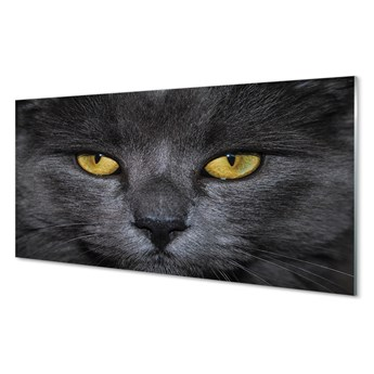 Obrazy na szkle Czarny kot