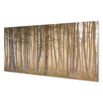 Obrazy na szkle Wschód słońca las drzewa