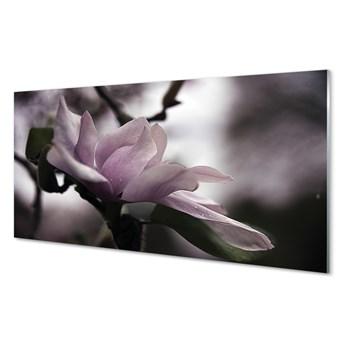 Obraz na szkle Magnolia