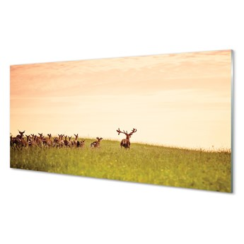 Obraz na szkle Stado jeleni pole wschód słońca