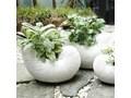 MUSZLA DEKORACYJNA DONICZKA Z TERRACOTY WYBIERZ ROZMIAR SNAIL 26.5x18.5x15 cm Kategoria Figury i rzeźby Rośliny Kolor Biały