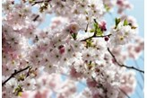 Fototapeta Komar 8-507 National Geographic - Spring - Wiosna