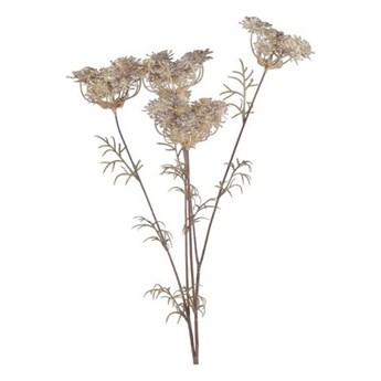 More Madam - Kwiat polny Dara