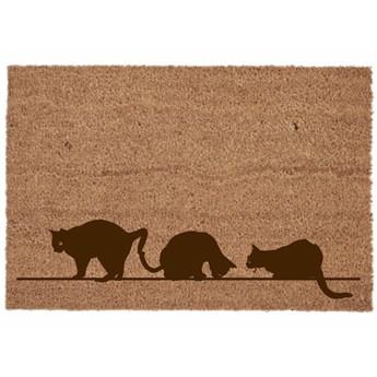 Wycieraczka koty