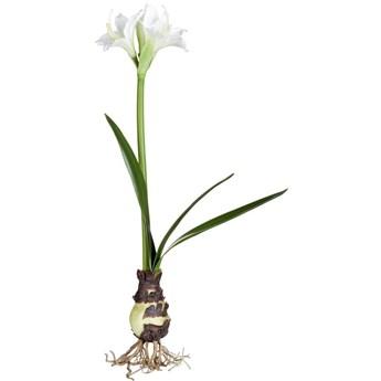 Figurka dekoracyjna Flora Amaryllis 16x55 cm zielona