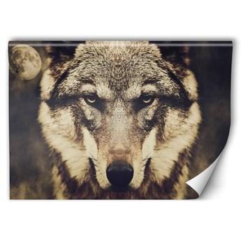 Fototapeta - Głowa wilka