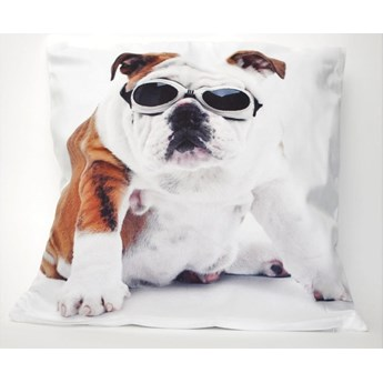 Poszewka dekoracyjna Dog & Glasses 42x42