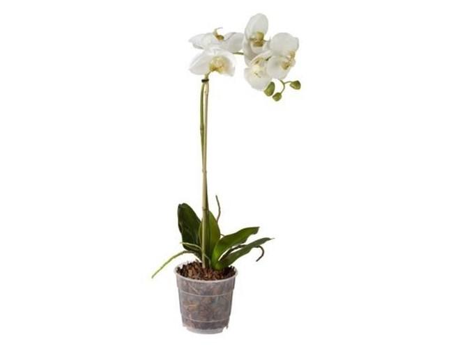 AR Orchidea Pot 55cm storczyk w donicy