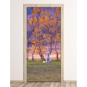 Fototapeta na drzwi małe zwierzę FP 6072