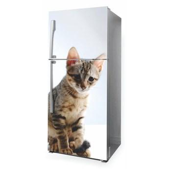 Fototapeta na lodówkę kot P53