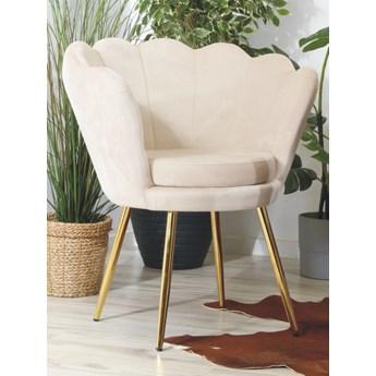 Welurowy fotel muszelka SHELL w kolorze beżowym na złotych nogach