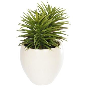Sztuczna roślina Pino drzewko sosnowe z ceramiczną białą doniczką 16 cm