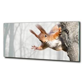 Foto-obraz szkło hartowane Wiewiórka