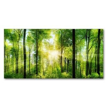 Foto obraz szkło hartowane Las w słońcu