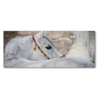 Foto obraz szkło akryl Biały koń arabski