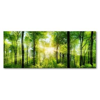 Foto obraz szkło akryl Las w słońcu