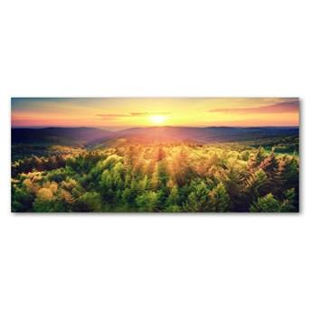 Foto obraz szkło akryl Las zachód słońca