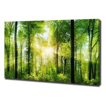 Duży Foto obraz na płótnie Las w słońcu