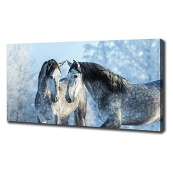Foto obraz na płótnie Szare konie zimą