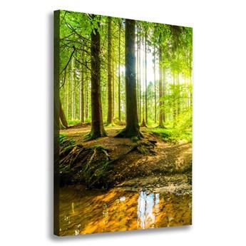 Foto obraz na płótnie Słońce w lesie