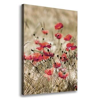 Foto obraz canvas Polne kwiaty