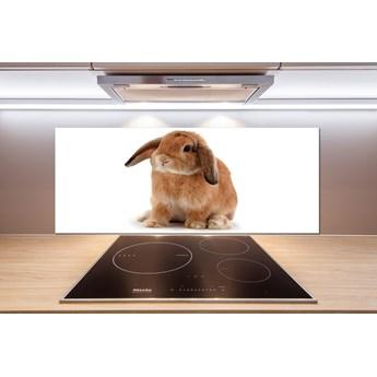 Panel dekor szkło Rudy królik