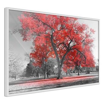 Plakat - Czerwone drzewo