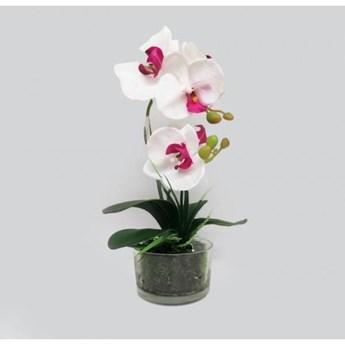 Storczyk w szklanej  doniczce  odcień bieli i fioletu wys. 35 cm