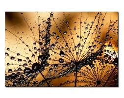 Obraz na płótnie OIN011_11 - Kropelki rosy III