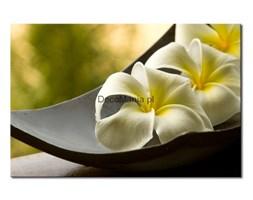 Obraz na płótnie OKW063_11 - Harmonia z naturą