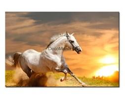Obraz na płótnie OZW006_11 - Galopujący koń