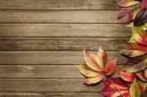 Fototapeta F2697 - Tło z desek i liści