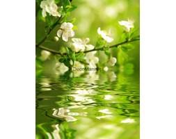 Fototapeta F2621 - Gałąź kwiatów nad wodą