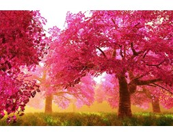 Fototapeta F3485 - Piękny ogród z różowymi drzewami wiśni