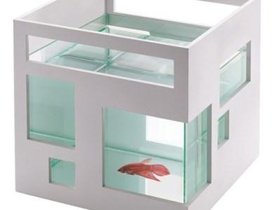 Katarzyna maj 4 for Umbra fish hotel