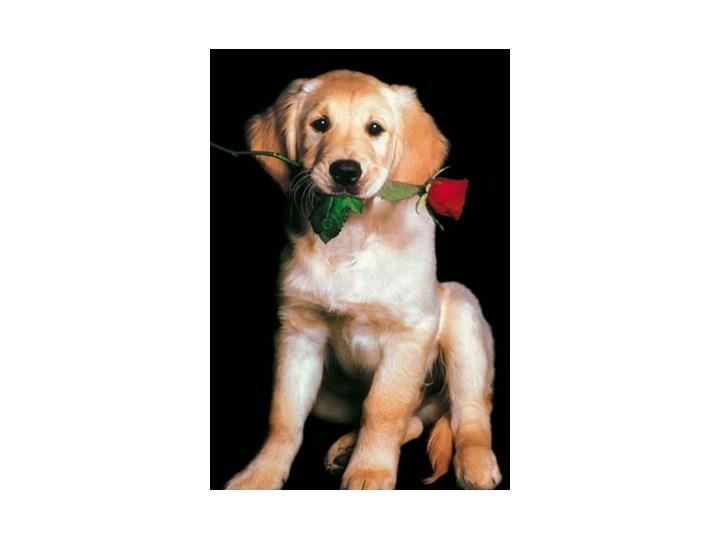 Labrador Czerwona Róża Plakat Plakaty Zdjęcia