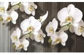 Fototapeta Consalnet 1015 - Biały storczyk
