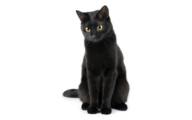 Fototapeta F4799 Czarny Kot Fototapety Zdjęcia Pomysły