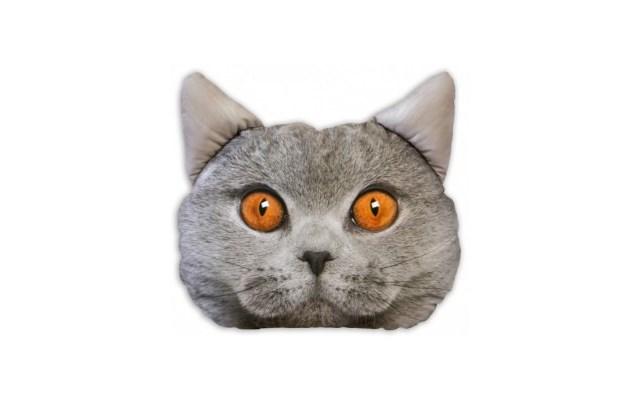 Poduszka Kot Poduszka Zwierzę Kotek Grey Poduszka Z Kotem Poduszka Z Kotami Poduszki Poduszka W Koty