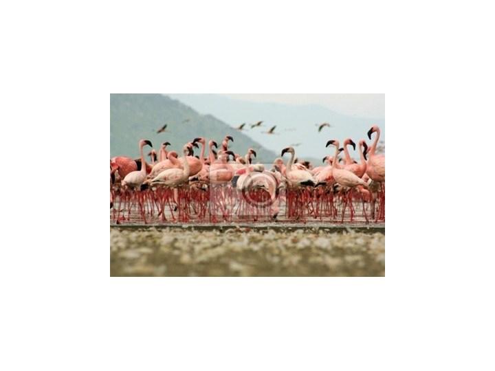 Obraz Flamingi Obrazy Zdjęcia Pomysły Inspiracje Homebook