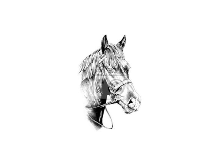 Fototapeta Odręczny Rysunek Ołówkiem Głowa Konia Fototapety
