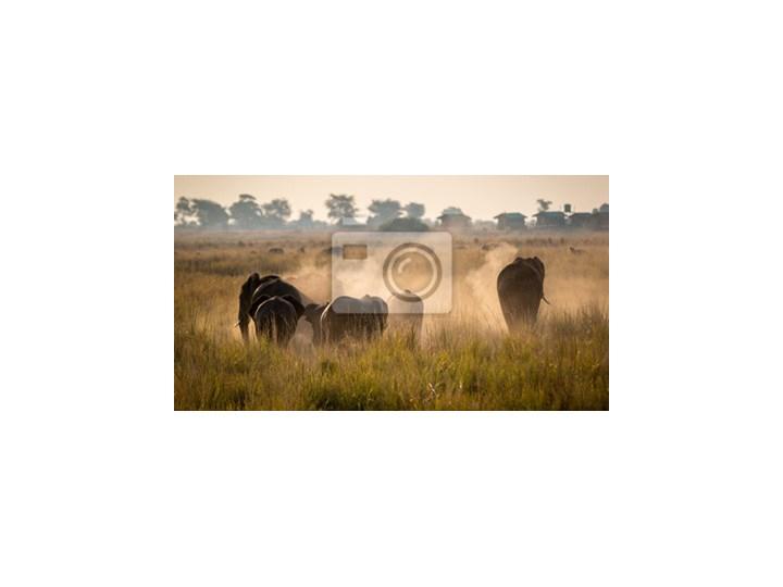 Plakat Piękna Przyrody W Parku Narodowym Chobe Botswana