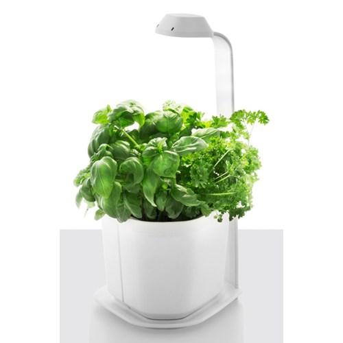 Doniczki na zioła, kwiaty i warzywa Tregren Genie