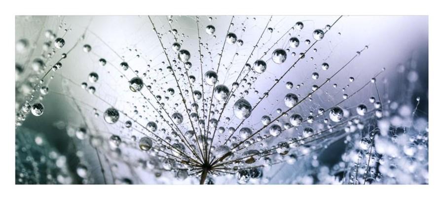 Obraz Glasspik Dandelion3 50 Cm X 125 Cm Obrazy Zdjęcia Pomysły